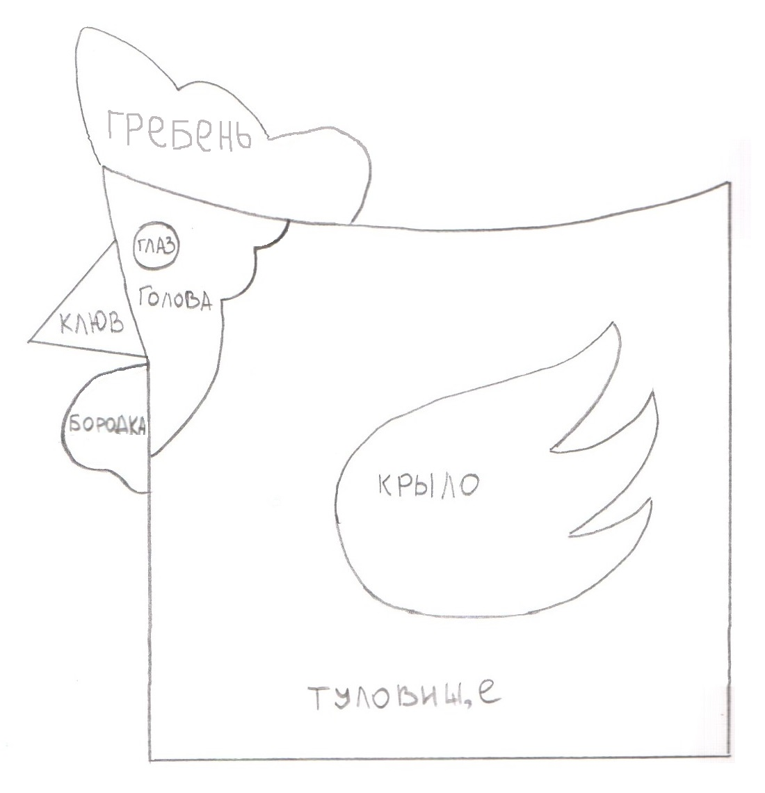 petuh-vykroika-variant1
